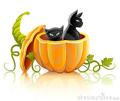 Halloween pumpkin vegetable with black cats