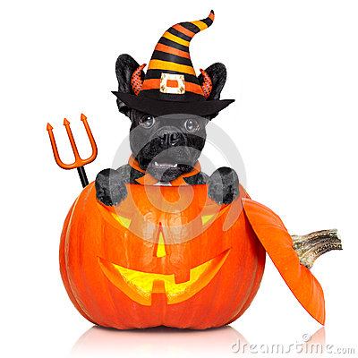 Free Halloween Pumpkin Witch Dog Royalty Free Stock Photos - 78612778
