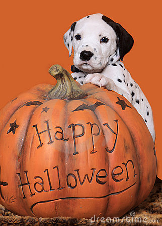 Free Halloween Puppy Royalty Free Stock Image - 15772656