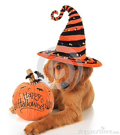 Free Halloween Puppy Stock Image - 34163721