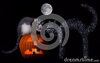 Halloween rat cat