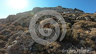 Halna kózka na skale w Grecja zdjęcie wideo