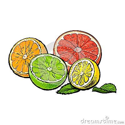 Free Halves Of Orange, Grapefruit, Lime And Lemon, Hand Drawn Illustration Stock Photography - 92105192