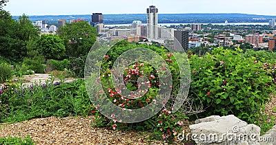 Hamilton, Canadá, centro de ciudad con las flores en 4K delantero metrajes
