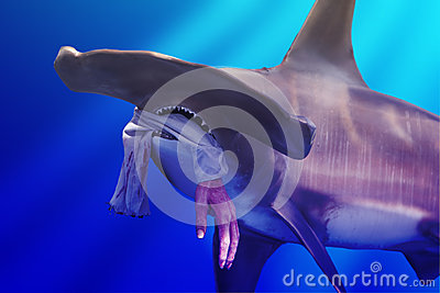 Hammerhead Shark with Hand