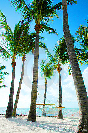 Free Hammock Amongst Palm Trees Royalty Free Stock Photos - 1561598