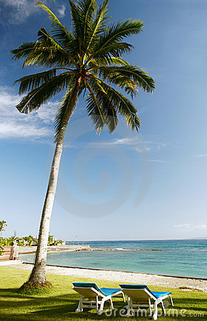 Royalty free stock photos hammock at the beach
