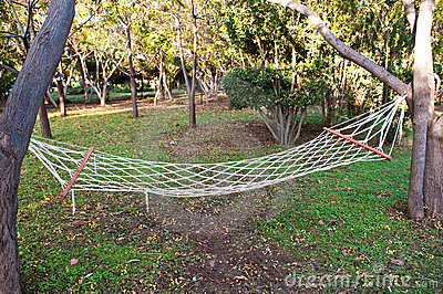 Hammock in forest
