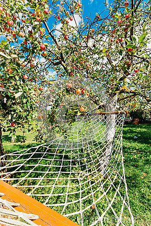 Free Hammock Hanging Under Apple Tree With Red Apples In Yard Of The Rural House. Royalty Free Stock Photos - 85652868