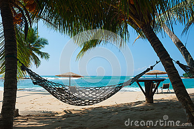 Hammock between palm trees