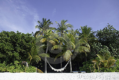 Hammock on a tropical beach, Maldives