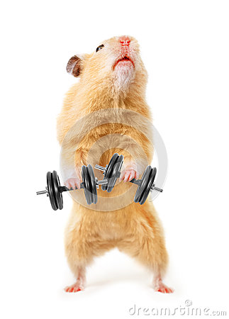 Free Hamster Royalty Free Stock Photo - 30018465