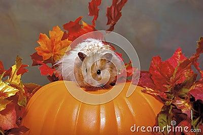 Hamster Atop a Pumpkin