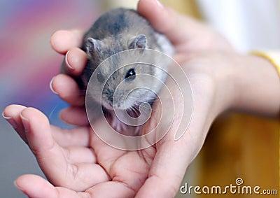 Hamster on child s hand