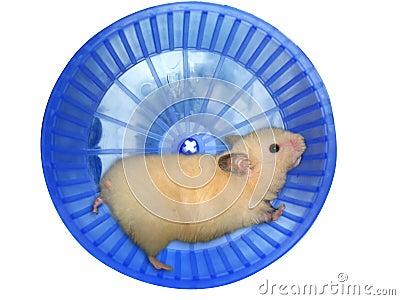 Le syndrome du hamster dans Communauté spirituelle hamster-dans-une-roue-thumb3314299