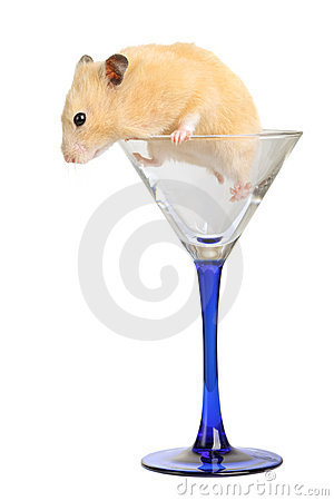 Hamster in glass