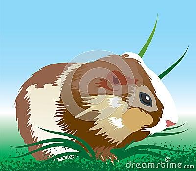Hamster illustration