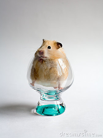 Free Hamster In The Glass Royalty Free Stock Image - 792116