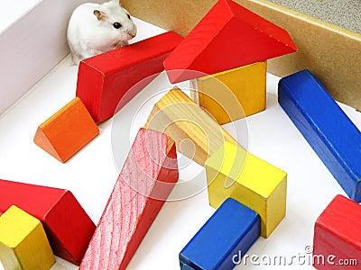 Hamster in maze