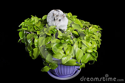 Hamster on a plant