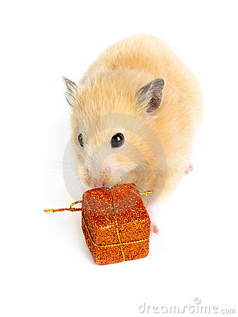 Hamster with present