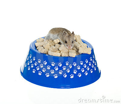 Hamster on top of milk bones in dog bowl