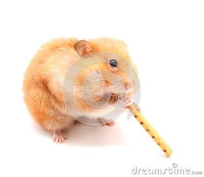 Hamster trumpeter