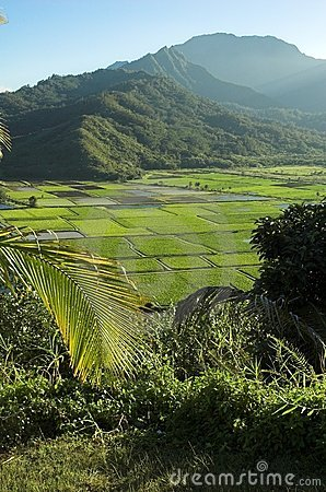Free Hanalei Valley Lookout At Kauai, Hawaii Stock Photos - 1513823