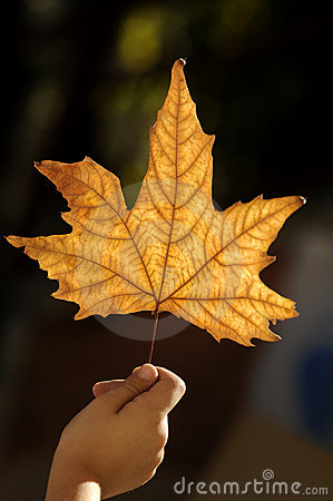 Hand with autumn leaf
