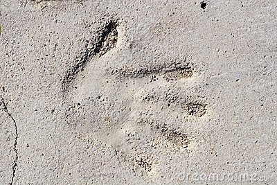 Hand in beton