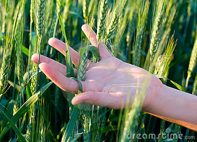 Hand and cereal crops