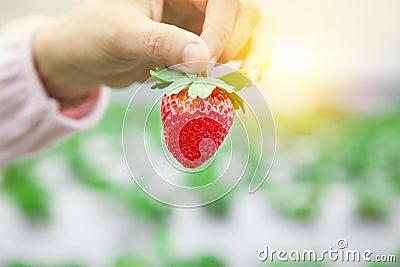 Hand, die Erdbeere anhält