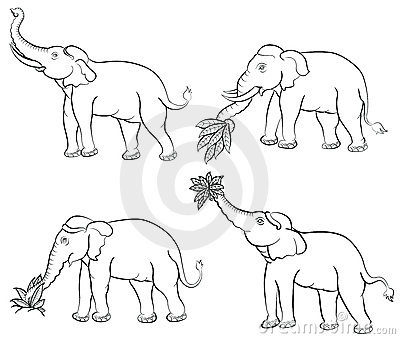 Indian Elephant Line Drawing Hand drawing elephant set