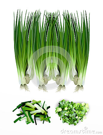 Hand Drawing of Fresh Spring Onions or Fresh Leeks