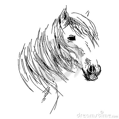 Hand Drawing Horse Head Stock Vector Image 49016305