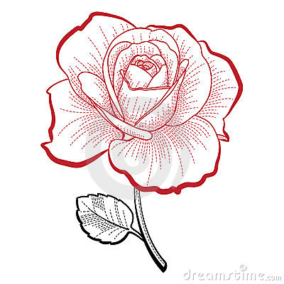 Hand drawing rose