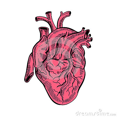 Free Hand Drawing Sketch Anatomical Heart.Cartoon Style Vector Illustration. Royalty Free Stock Photo - 86603375