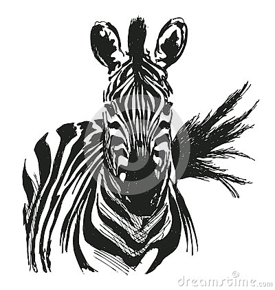 Free Hand Drawing Zebra Stock Photos - 62047693