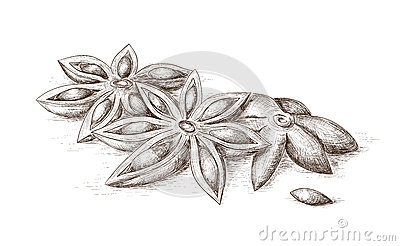 Hand drawn anise.