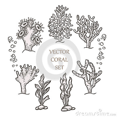 Free Hand Drawn Aquatic Coral Doodle Vector Illustration. Stock Photography - 93859662