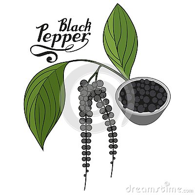 Free Hand Drawn Black Pepper, Spicy Ingredient, Black Pepper Logo, Healthy Organic Food, Spice Black Pepper On White Background Stock Photo - 127298040