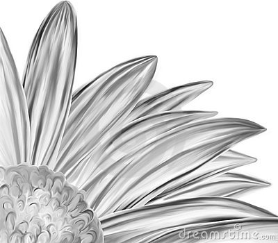 Hand drawn black white flower closeup