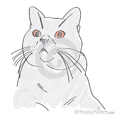 Hand drawn british blue cat