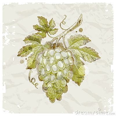 Hand drawn bunch of grapes