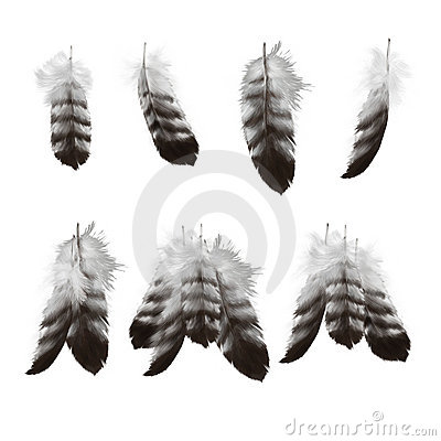 Free Hand Drawn Eagle Feathers Set Royalty Free Stock Photos - 15262708