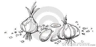 Garlic illustration drawing