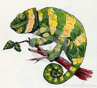 Hand drawn green chameleon with yellow stripes