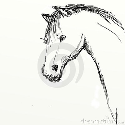Hand drawn horse head sketch