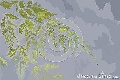 Hand drawn leaf of a fern