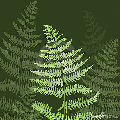 Hand drawn leaf of a fern